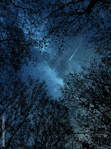 Falling star above the trees