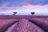 Fototapety Lavender field summer sunset landscape