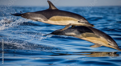Plexiglas Dolfijn Dolphins jump out at high speed out of the water. South Africa. False Bay.