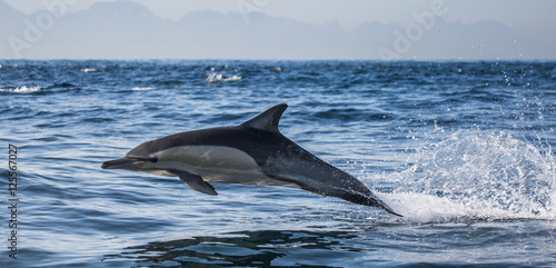 Fotobehang Dolfijn Dolphins jump out at high speed out of the water. South Africa. False Bay.