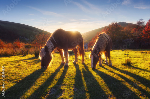 Billede horses in the mountain