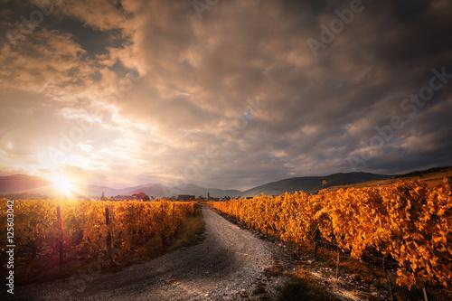 Papiers peints Vignoble Vignoble en automne