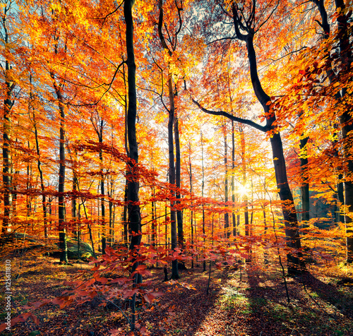 Obraz Beautiful view of the autumn forest.
