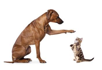 dachshund and  rhodesian ridgeback  group of dog standing