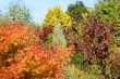 Herbst 163