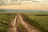 Droga w wiosenny poranek pomiędzy polami