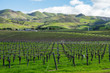 California Central Coast Vineyard in Winter