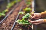 Planting - 125675286