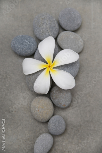 Poster Spa Close up frangipani in wooden bowl with spa stones –white background