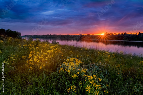 Poster Summer sunset landscape with a river and yellow flowers
