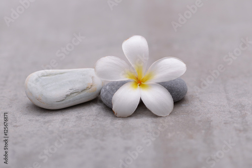 Poster Spa frangipani with spa stones on grey background.