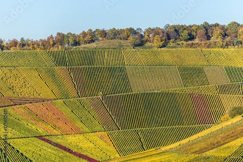 Fototapeta Vineyards - beautiful landscape of wine region