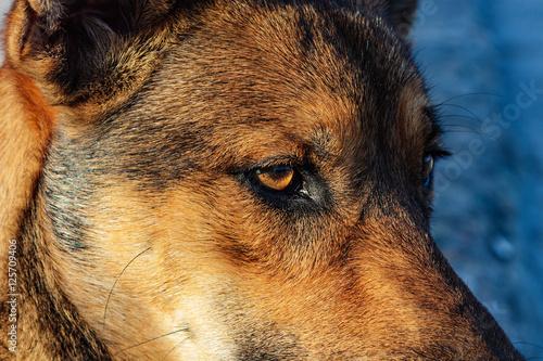 Poster Stray dog