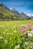 Blühende Bergwiese vor einen Bergpanorama - 125713851