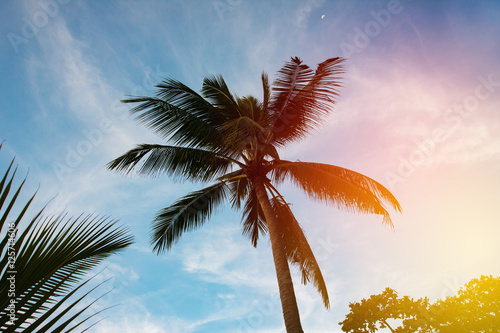 Palm tree silhouette in sunset sky Poster