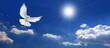 Leinwanddruck Bild - Frieden Taube mit Wolken und Sonne