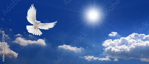Leinwanddruck Bild Frieden Taube mit Wolken und Sonne
