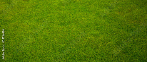 Green grass texture from a golf course - 125726480