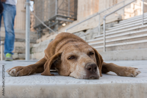Poster brown dog lies on stairs (Acropolis, Athens, Greece)