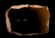 Black cat hiding in the shadows of a paper bag, with her eyes gleaming in the darkness, isolated on black