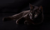Black cat resting against dark background, disappearing into the shadows