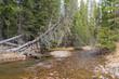 Colorado River flowing through Rocky Mountain NP