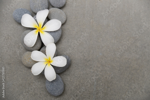 Poster Spa Two frangipani, with pile stones on grey background.