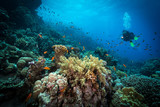 Diver explores reefs in the Red Sea, Egypt - 125808020