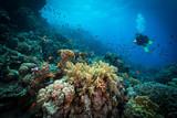 Nurek zbada rafy na Morzu Czerwonym w Egipcie