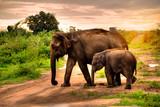Elephant, Sri Lanka, Asia, Animal - 001