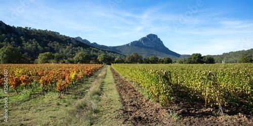 Papiers peints Vignoble panorama sur les vignes du sud de la France en automne, avec un pic en arrière plan
