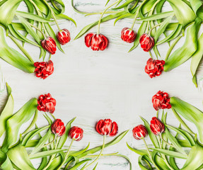 Fresh red tulips , flowers frame on white wooden background, top view