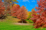 Colorful Autumn Leaves green, yellow, orange, red