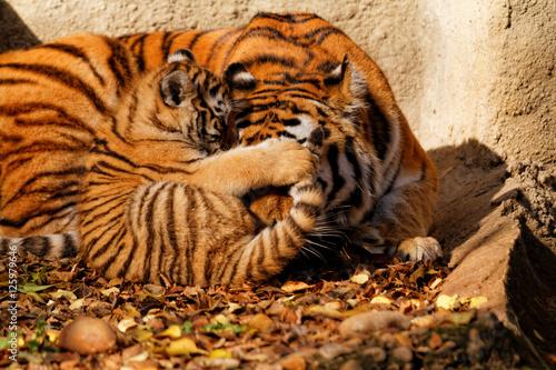 Poster Tiger mum
