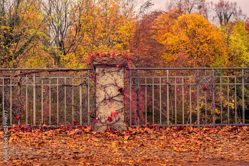 Poster Oranje eclat Herbst Impression Gefallene Blätter und bunte Bäume