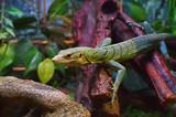Зелёная ящерица в террариуме.