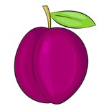 Plum icon. Cartoon illustration of plum vector icon for web