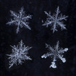 Four Real Snowflakes Isolated