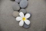 frangipani with spa stones on grey background.