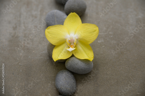 Poster Spa Pile of gray stone with yellow orchid on grey background.