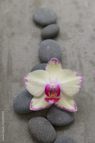 Poster Spa Gray stone with yellow orchid on grey background.