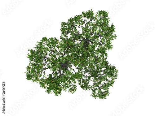 tree isolated on white background Poster