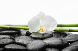 Two White orchid blossom with black stones ,grove on wet background