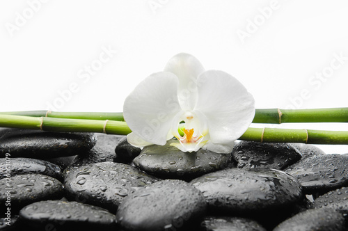 Fotobehang Spa Two White orchid blossom with black stones ,grove on wet background