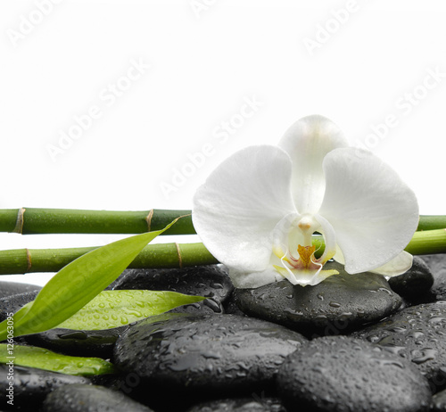 Fotobehang Spa White orchid blossom with black stones ,grove,leaf on wet background