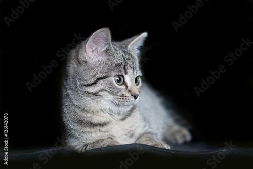 Zdjęcia na płótnie, fototapety na wymiar, obrazy na ścianę : szary, pręgowany, młody kotek na czarnym tle