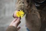 Fototapety 黄色い花を手渡す親子の手