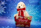 Golden Retriever Puppy for Christmas