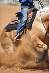 The side view of a rider on a horseback running ahead and stopping the horse in the dust.