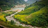 Sapa rice field, rice terraces, Sapa valley, rice field on terraces in Sapa, Vietnam. Harvest season. Vietnam landscape.